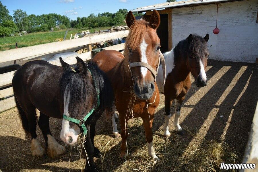 Как начать конный бизнес в Беларуси