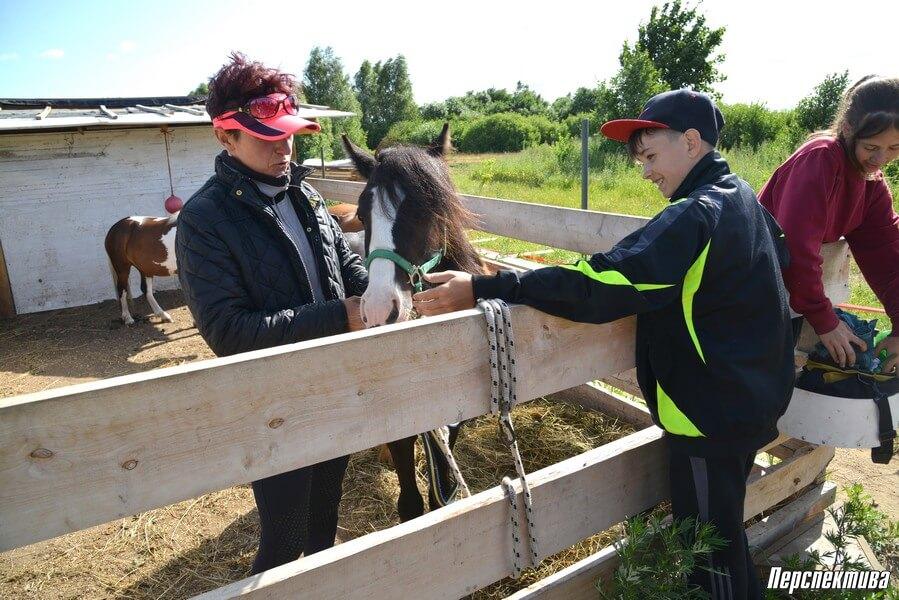 Как открыть конный бизнес в Беларуси.