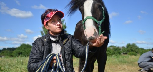 Конный бизнес в Беларуси