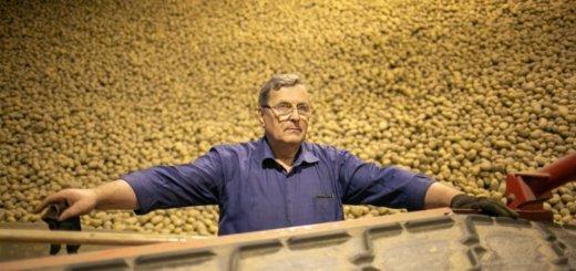 Заработали миллионы долларов на бульбе. Как в Беларуси работает самое крупное хозяйство по производству картошки.